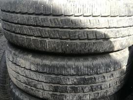 Pirelli, vasarinės 195/70 R15